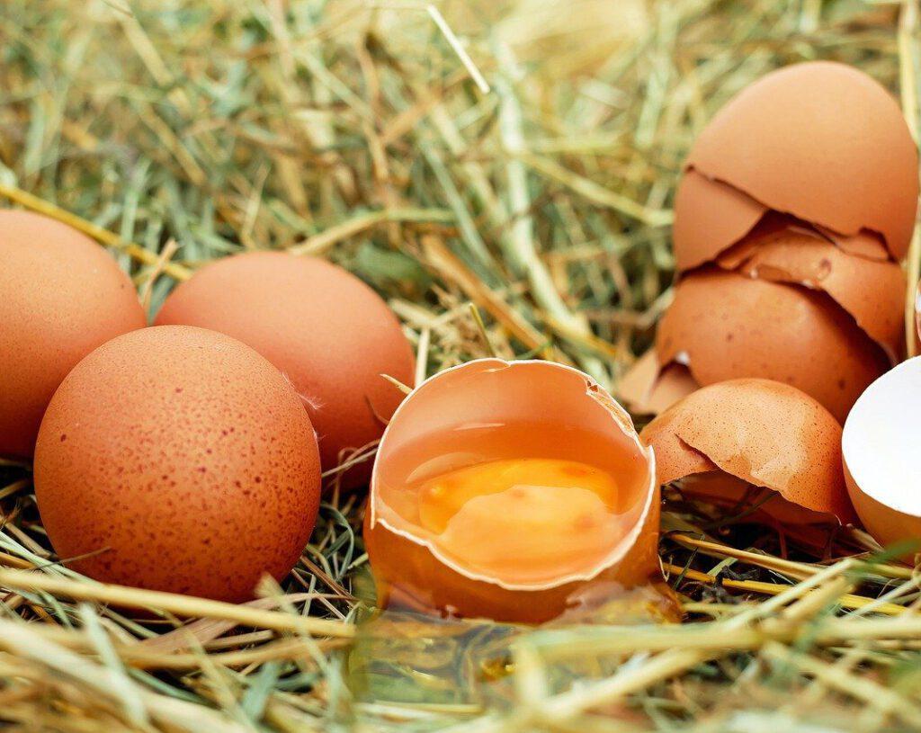 egg, chicken eggs, raw eggs